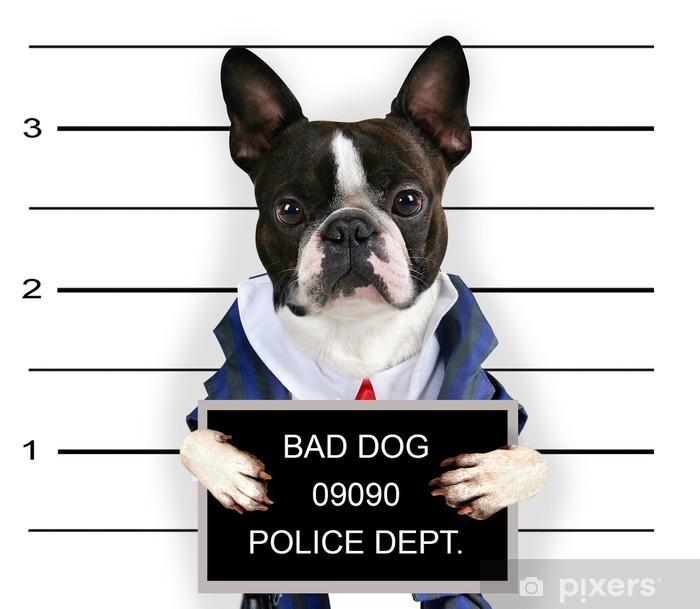 Plakat Mugshot złego psa - Ssaki