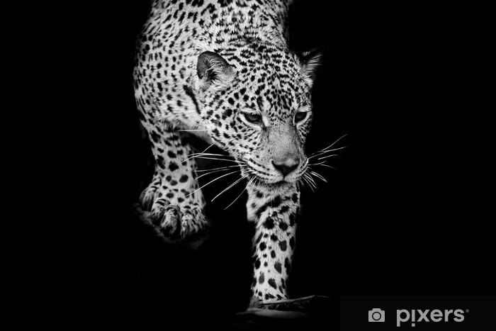 Sticker Pixerstick Fermer noir et blanc Jaguar Portrait - Mammifères