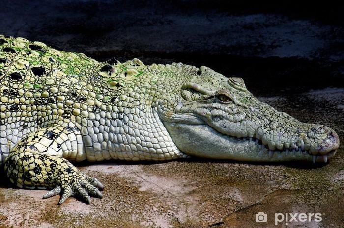 Naklejka Pixerstick Krokodyl 1 - Inne Inne
