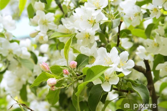 Nálepka Pixerstick Jabloň kvetoucí - Jabloně