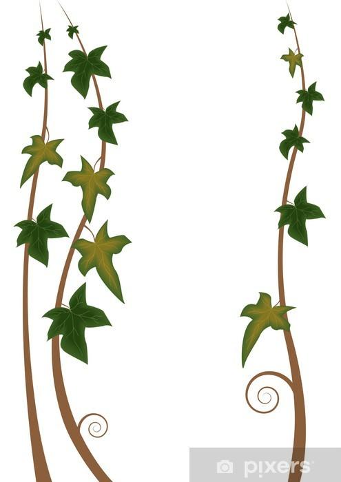 Papier peint vinyle Lierre - Plantes