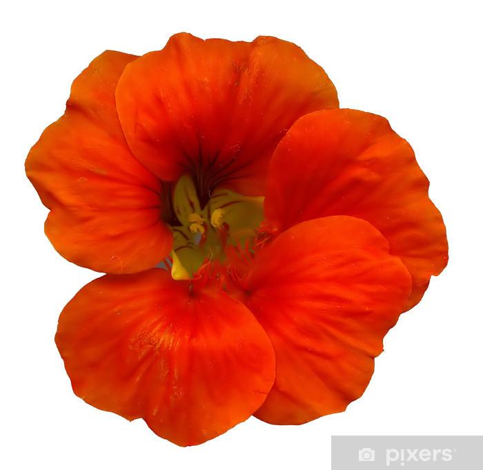 Naklejka Pixerstick Głowy nasturcja - Kwiaty