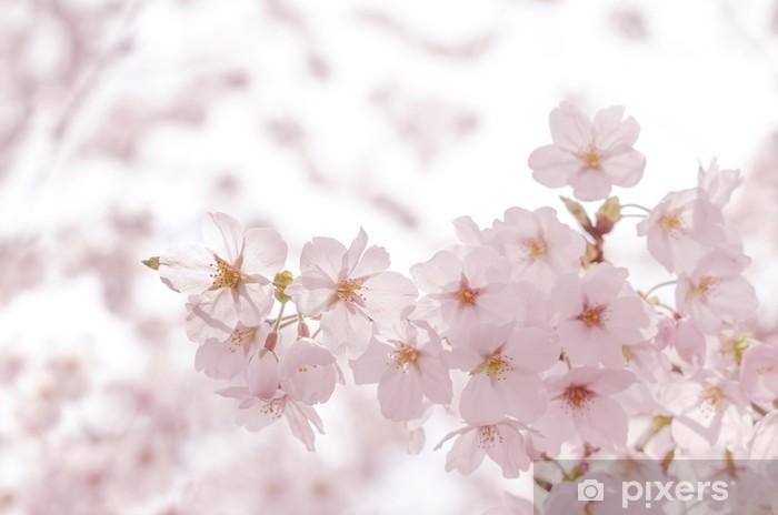 Fotomural Estándar Flores de cerezo - Flores