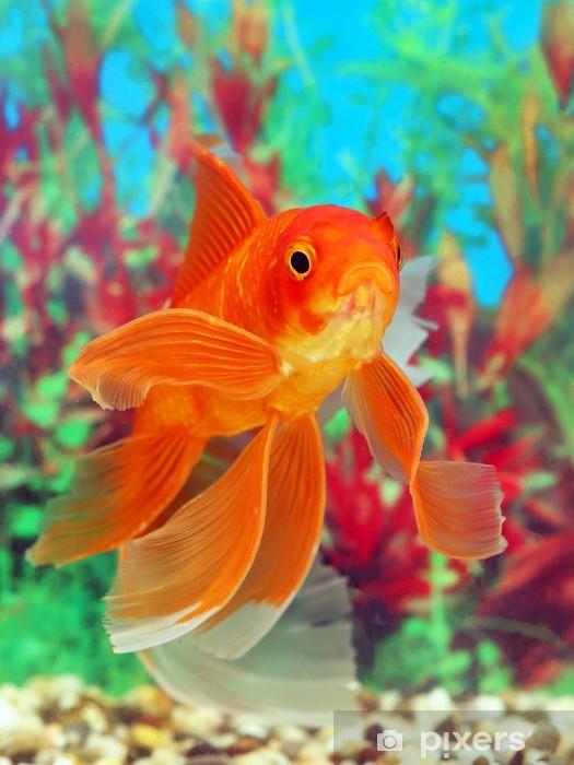 sticker poisson rouge dans un aquarium pixers nous vivons pour changer. Black Bedroom Furniture Sets. Home Design Ideas