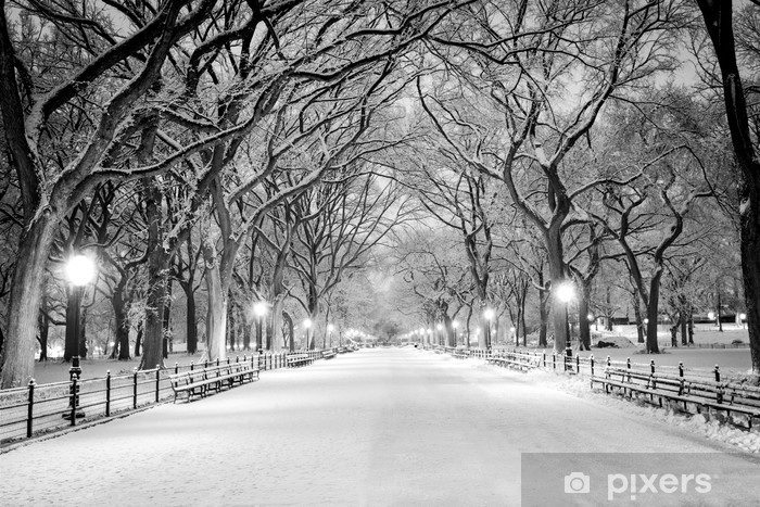 Central Park, NY covered in snow at dawn Vinyl Wall Mural - American Cities