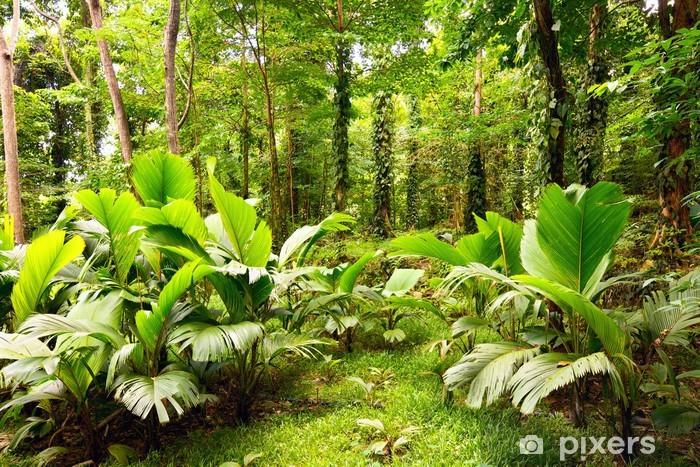 Tropisk regnskov i Mahe Island, Seychellerne Vinyl fototapet -