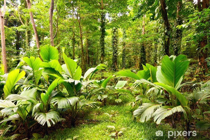 Papier peint vinyle Forêt tropicale à Mahé, Seychelles - iStaging