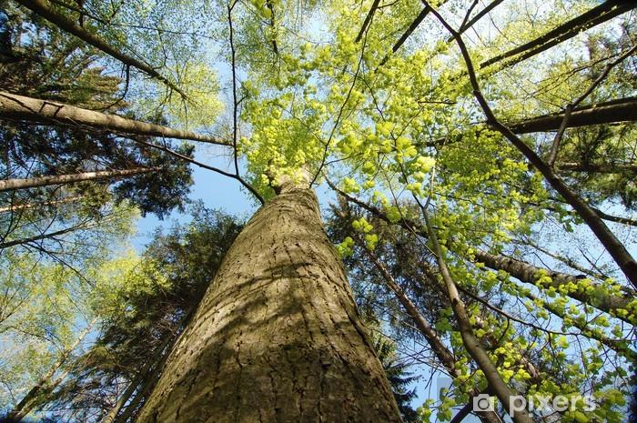 Vinyl-Fototapete Bäume - Wälder