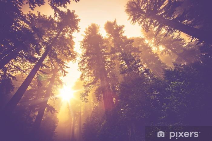 Zelfklevend Fotobehang Misty Forest Trail - Bossen