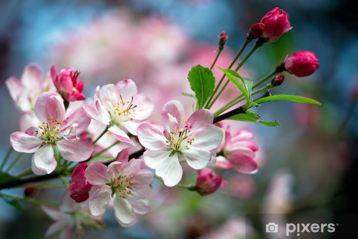 Nærbillede billede af æble blomster Fototapet • Pixers® - Vi lever for forandringer