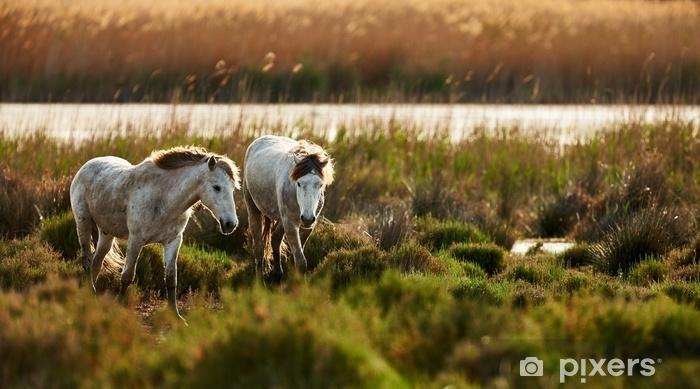 Zelfklevend Fotobehang Twee jonge witte paarden van camargue - Dieren