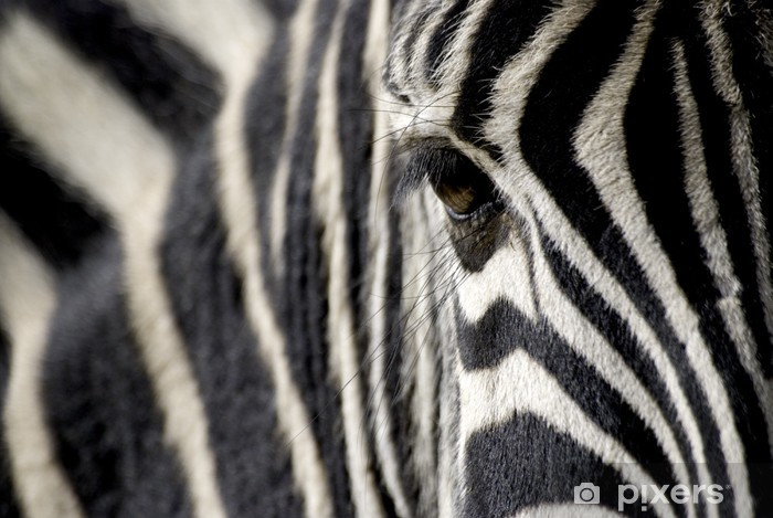 Naklejka Pixerstick Oko zebra - Tematy
