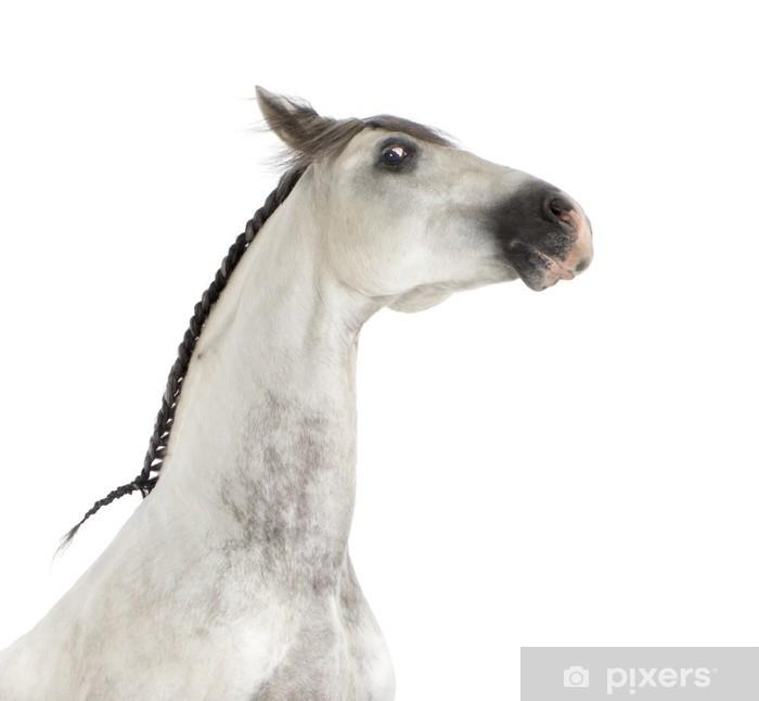 Nálepka Pixerstick Close-up z andaluského koně - Savci