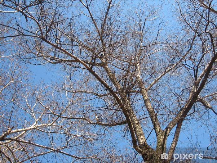 Fototapeta winylowa Drzewo ubóstwa - Drzewa