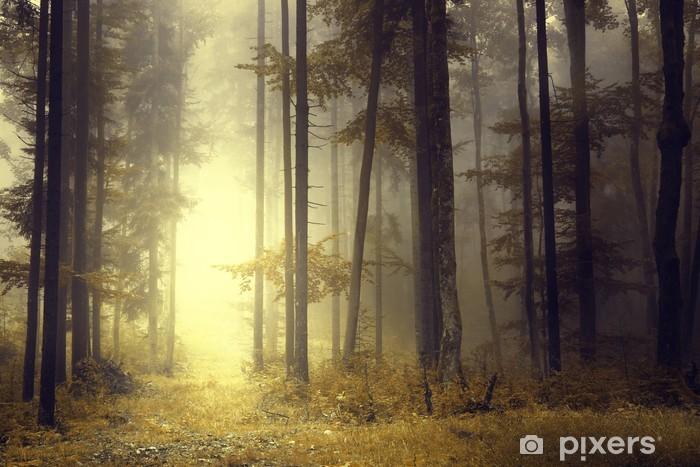 Fototapeta samoprzylepna Fantasy pomarańczowa lampka las - Pory roku
