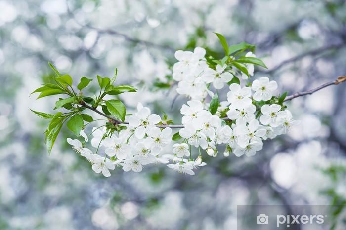 Nálepka Pixerstick Cherry květiny - Rostliny