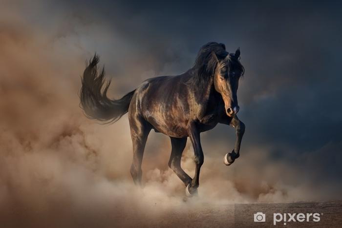 Fototapeta zmywalna Piękny czarny ogier uruchomić w pył pustyni przed zachodem słońca niebo - Zwierzęta