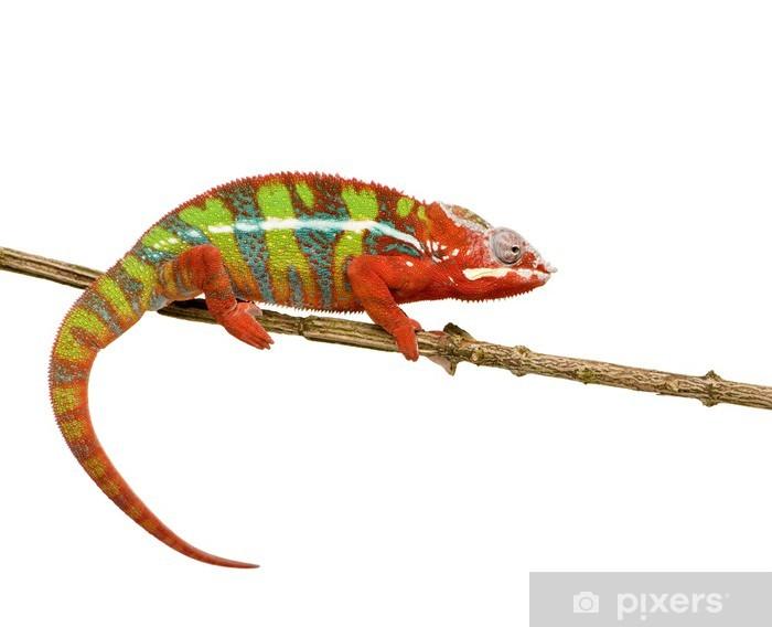 Sticker Pixerstick Chameleon Furcifer Pardalis - Ambilobe (18 mois) - Animaux imaginaires