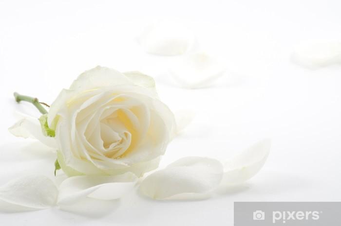 Vinyl-Fototapete Weiße Rose mit Blütenblätter close-up - Blumen