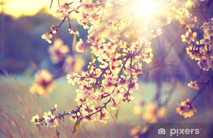 Beautiful nature scene with blooming tree and sun flare Self-Adhesive Wall Mural - Themes
