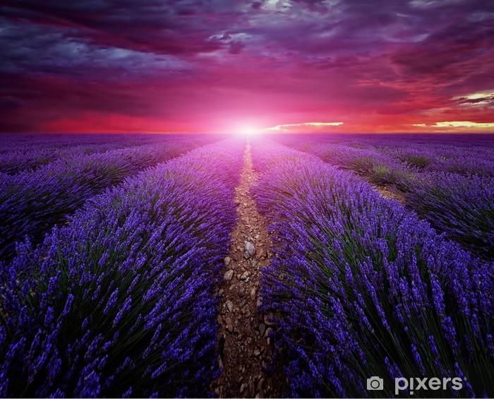 Vinylová fototapeta Krásný obraz levandule pole léto slunce krajiny - Vinylová fototapeta