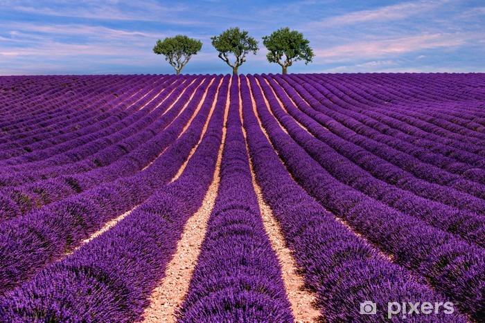 Vinyl Fotobehang Lavendel veld landschap Zomer zonsondergang met boom - Landschappen