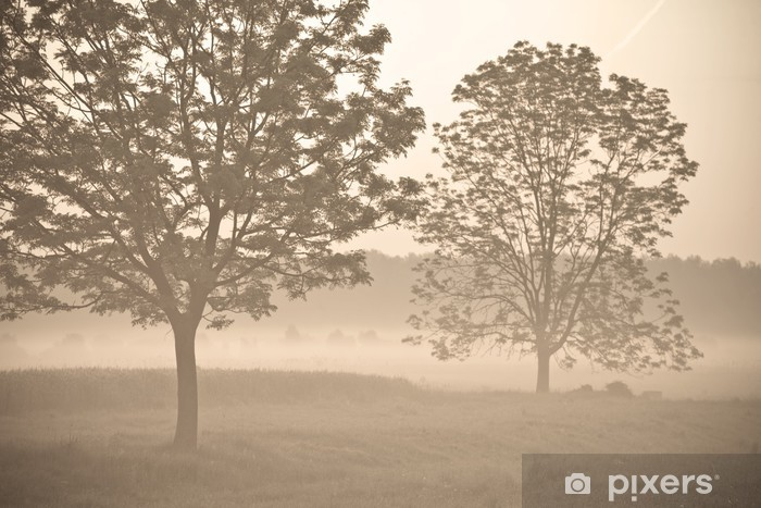 Morning fog 3 Vinyl Wall Mural - Skies