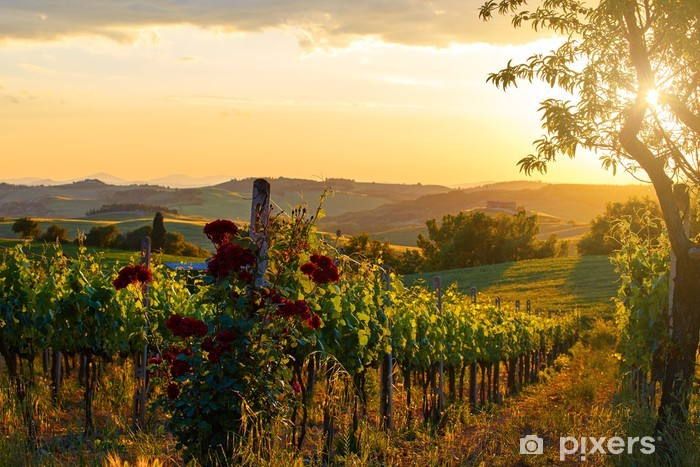 Tuscany vineyards in fall Vinyl Wall Mural - Mountains