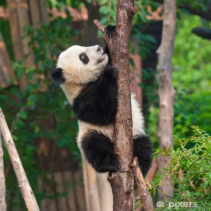 Panda bear climbing tree Framed Poster - Themes