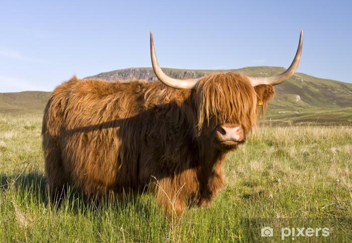 Pixerstick Sticker Schotse hoogland koe - Zoogdieren
