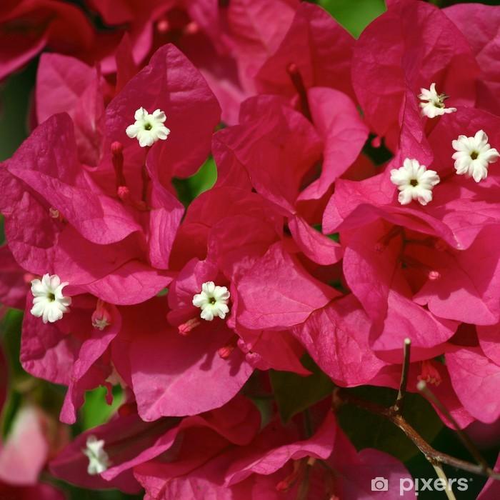 Vinilo para Puerta Seychelles buganvillas flores - Flores