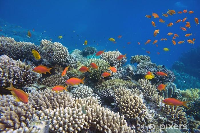 Naklejka Pixerstick Tropikalnych ryb i koralowców twardych - Zwierzęta żyjące pod wodą