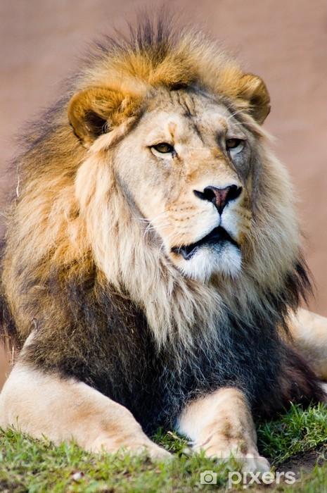 2262553c9dd87 Papier peint Lion le roi lion • Pixers® - Nous vivons pour changer