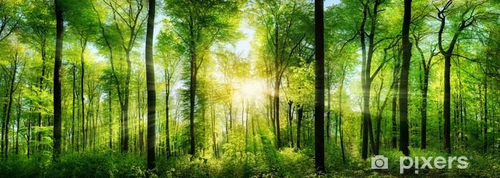 Papier peint vinyle Panorama de la forêt avec des rayons de soleil - Thèmes