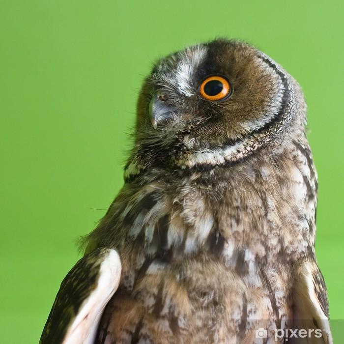 Fototapeta winylowa Sowa uszata - Ptaki
