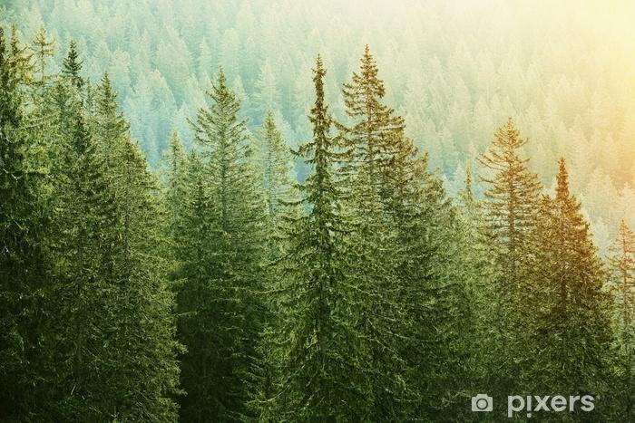 Vinyl Fotobehang Groen naaldbos dat door zonlicht wordt aangestoken - Landschappen