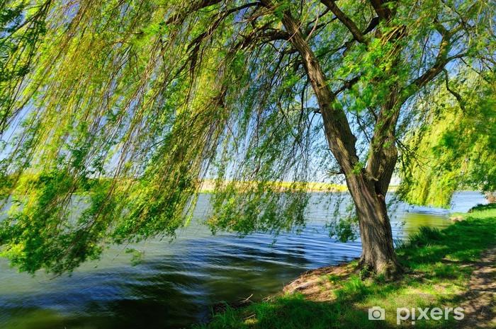 Papier peint vinyle Saule pleureur au bord du lac - Eau