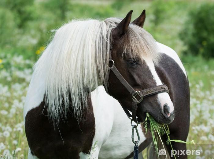 Vinilo Pixerstick Hermoso caballo pastando en el prado - Mamíferos