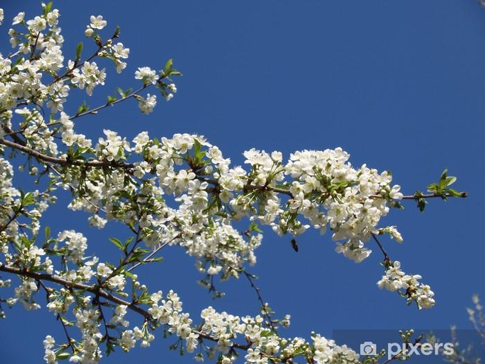Vinyl-Fototapete Florets einer Aprikose - Bäume