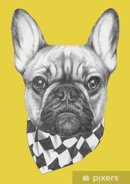 Sticker Pixerstick Hand drawn portrait of French Bulldog with scarf. Vector isolated elements. - Mammifères