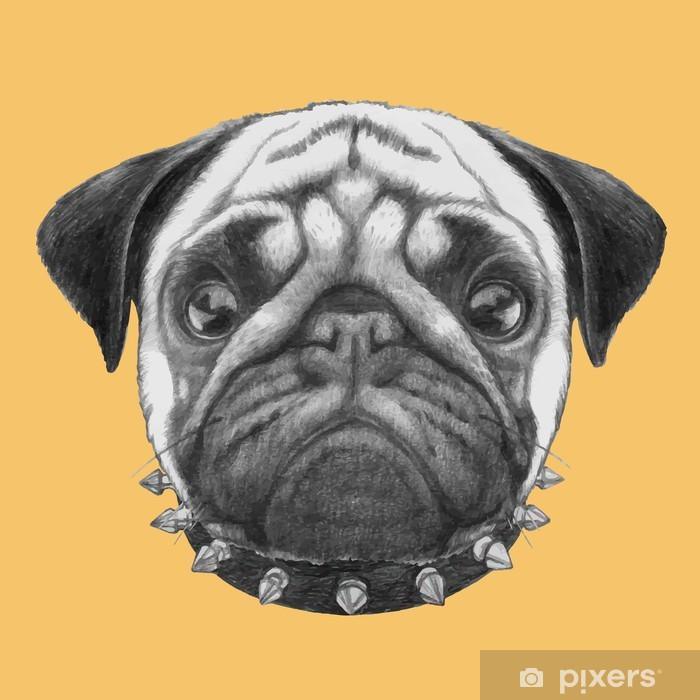 Fototapeta winylowa Ręcznie rysowany portret Pug pies z kołnierzykiem. Vector pojedyncze elementy. - Ssaki