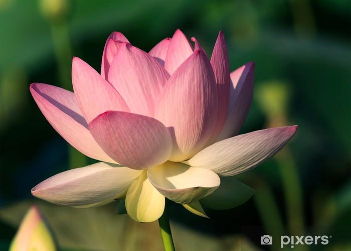 Carta Da Parati Fiori Di Loto : Carta da parati fiore di loto u pixers viviamo per il cambiamento