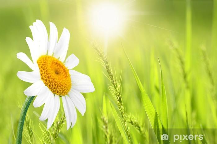 Papatya Tek çiçek çiçek Duvar Resmi Pixers Haydi Dünyanızı