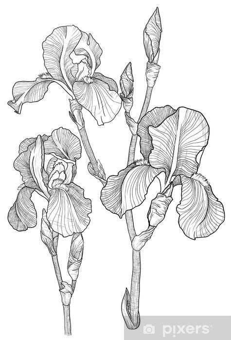 Papier peint vinyle Croquis du bouquet d'iris en fleurs -