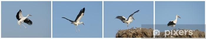 Papier peint vinyle Storks - Oiseaux