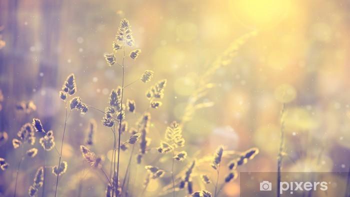 Fototapeta winylowa Retro niewyraźne trawa trawnik o zachodzie słońca z pochodni. Vintage fioletowy czerwony i żółty kolor pomarańczowy efekt filtra stosowane. Selektywne fokus stosowane. - Rośliny i kwiaty