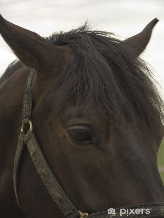 Vinyl Fotobehang Sad horse portrait - Thema's