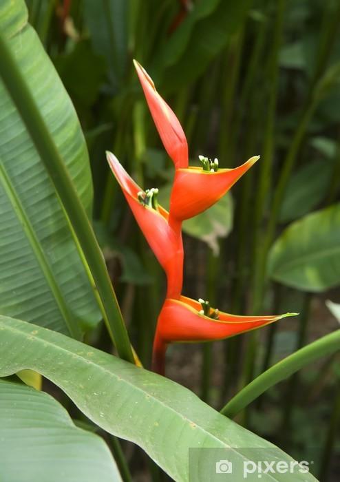 Papier peint vinyle Heliconia caribaea - Fleurs