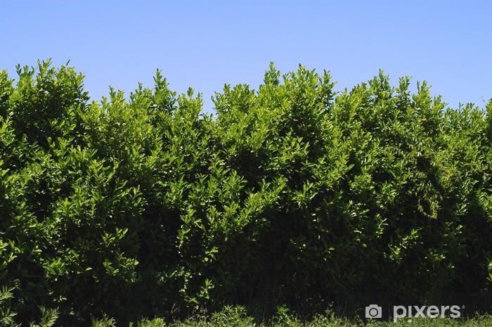 Fototapeta winylowa Zabezpieczenie - Rolnictwo