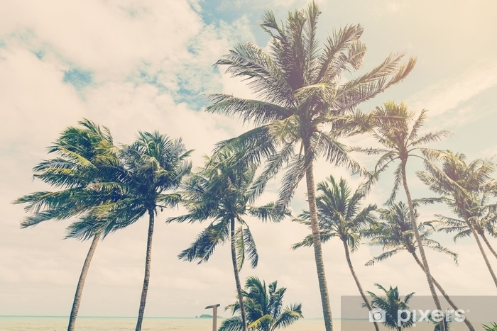 coconut plam tree on beach of nature background in vintage style Vinyl Wall Mural - Hobbies and Leisure